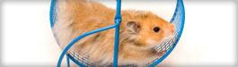Hamster running on wheel