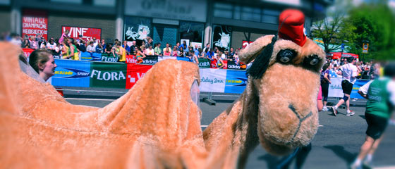 Two men in a camel costume on parade route